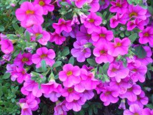 Spring Ladies' Event @ Christian Center Church | Belle Vernon | Pennsylvania | United States