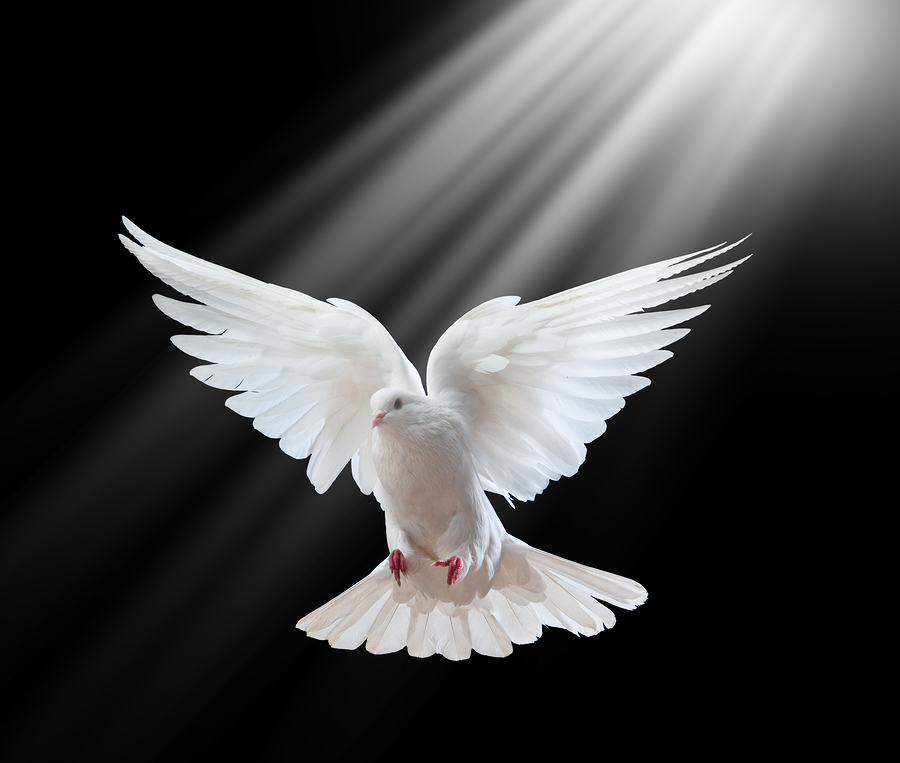 The dove that remained